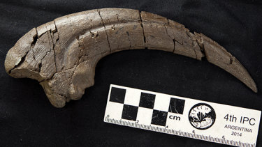 The distinctive hand claw fossil found during dinosaur digs on Victoria's Otway Coast