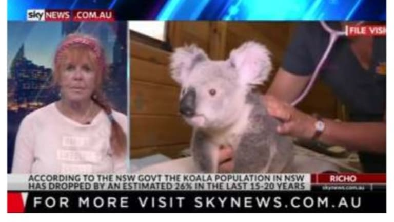 Koala conservationist Sue Arnold from the group Australians for Animals plans to take the Queensland Government to court for poor koala policy.