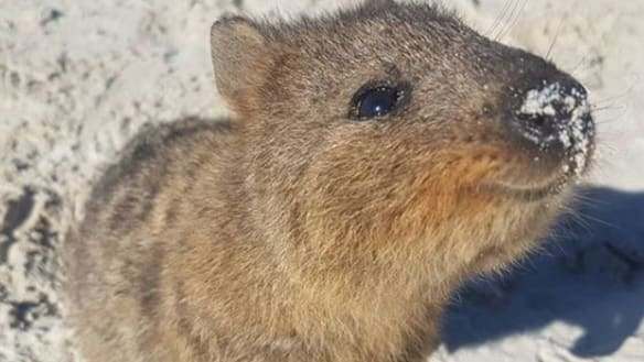 Come on Rottnest.  Seriously.  Get. It. Together.
