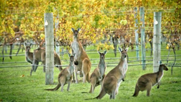 Perth to Margaret River has topped the list of WA's best road trips.