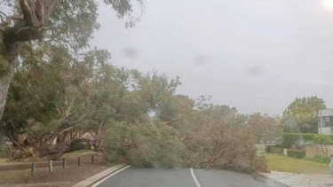 Trees have fallen on to roads and powerlines across the state.