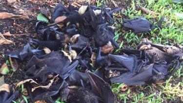Hundreds of bats have dropped dead in the heat already this week.