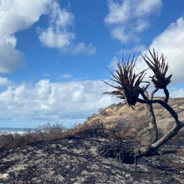 The Fraser Island fire scorched hectares of vegetation in late 2020.
