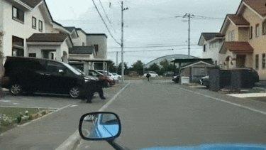 Wild bear on rampage through Sapporo on Friday June 18.