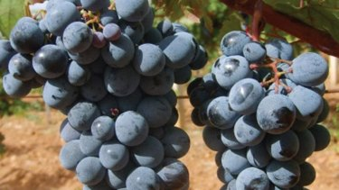 The ACCC is concerned about market practices in Australia's warm climate wine grape growing regions.