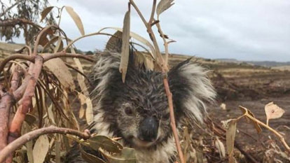 Outdated Victorian environment laws failing wildlife: report