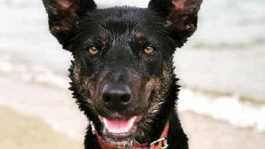 Dog Ezra was stabbed to death at Glen Creek, in northern Victoria.