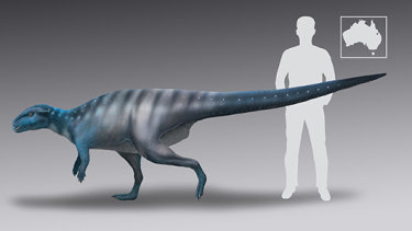 A reconstruction of the probable size and shape of the dinosaur which made one set of footprints on the roof of a Queensland cave 200 million years ago.