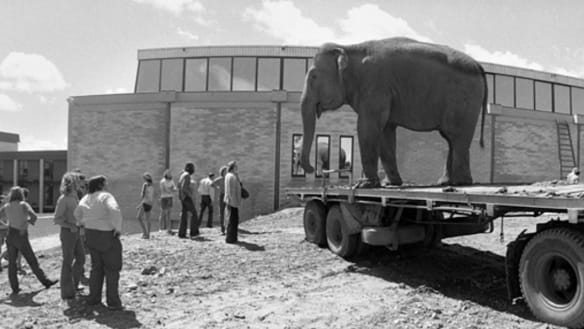 Canberra university students once snuck an elephant onto campus