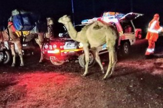 Emergency services with some of the camels on Sunday.
