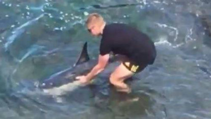 Dolphins saved from the shallows at New Zealand's Houghton Bay