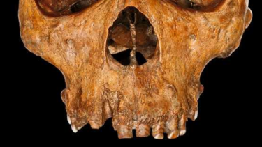 The Broken Hill (Kabwe 1) skull, one of the best-preserved fossils of the early human species Homo heidelbergensis.