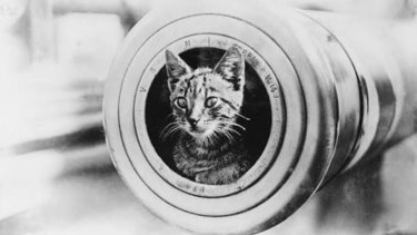 Red Lead, the ship's cat, on board HMAS Perth.