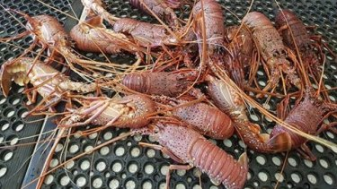 Targeted assistance to sectors such as the WA rock lobster industry is being examined by the Morrison government.