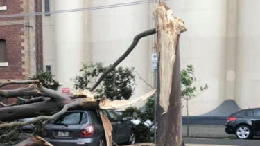 A tree has fallen on a car in Munster Terrace, North Melbourne.