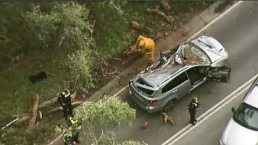 A tree limb has fallen on the car of a mother and daughter in Belgrave.
