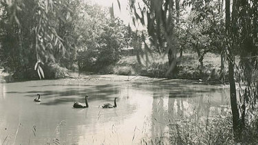 The Domain Creek pond in the mid-1900s.