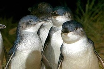 Emergency service workers will receive free entry for a limited time to attractions including the Phillip Island penguin parade.
