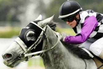 Alysha Collet has the ride on Geisel at Scone on Tuesday.