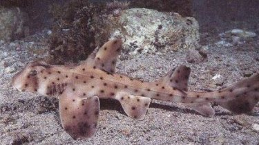 Miss Helen, a horn shark, was stolen from the San Antonio Aquarium