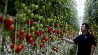 The Tomato Exchange at Guyra - rapidly declining water supplies are putting the town's horticulture industry at risk.