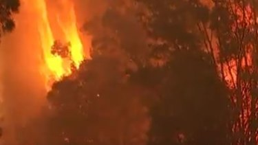 A bushfire forced the evactuation of thousands of Noosa residents.