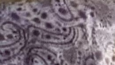 The woman was wearing a purple-and-white floral buttoned shirt (with the pattern pictured), dark blue long pants and no shoes, police say.