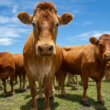 Buying grass-fed meat at a butcher or farmer's market costs more. But Australians are spending less of their incomes on food now than they ever have in the past.