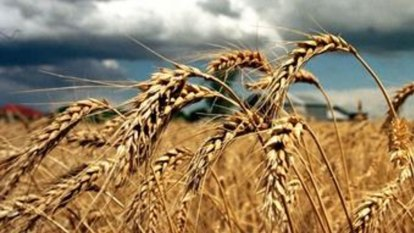 Break-up of Graincorp an option as suitor fails to commit
