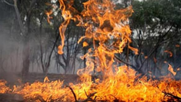 Tractor starts 20-hectare fire in Ipswich, suspending trains