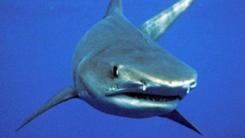 Bodysurfer stable after Queensland shark attack