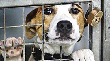 The NSW government has encouraged animal shelters to keep operating.