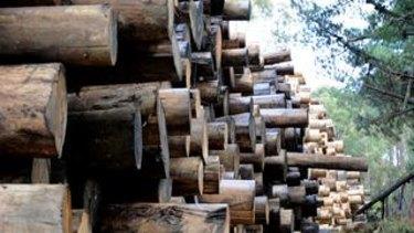 Stockpiles of logs at Neerim South.
