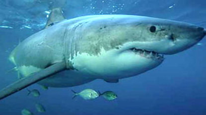 'The ocean is a dangerous place', and those who swim with sharks know it