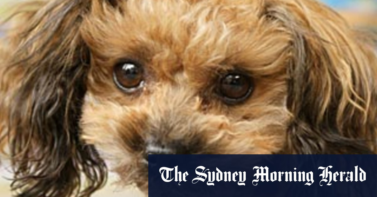 Penned in Victorians pining for a pet drive cruel smuggling trade