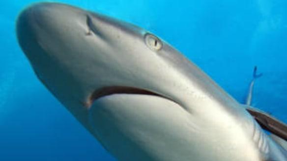 Senate bid to block reduction of national marine park protection fails
