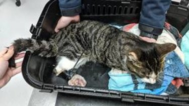 The cat was found by a passerby on April 30.