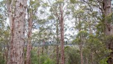 The Tree Top Walk near Walpole is a series of suspended walkways through the forest, just near the centre of the earthquake.
