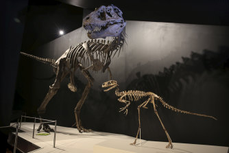 Back from Scotland: Dinosaurs in the spotlight in the opening exhibition.