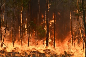 Defensive backburns near Warragamba Dam failed to prevent almost the entire catchment burning.
