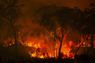 Soaring temperatures and gusty winds destroyed homes and bushland last weekend.
