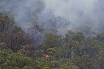 Fires in the bush near Jingelic on the NSW/Victorian border.