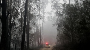 """The logging industry wants support to """"salvage"""" timber from the bushfire zones."""