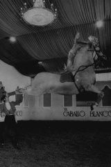 El Caballo Blanco dancing horse show in 1981
