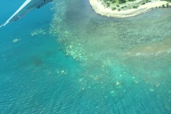 Bleaching on the Great Barrier Reef corals near Cooktown, as taken last week by a survey team led by James Cook University's Professor Terry Hughes.