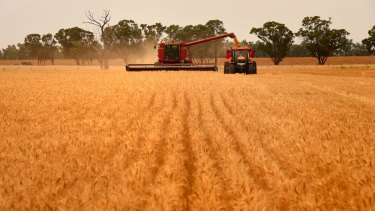 Farmers harvest wheat near Cowra in NSW.