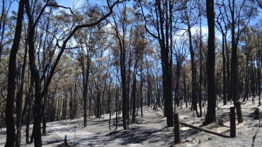 The devastating Parkerville fires of January 2014 were caused by the failure of a privately owned power pole.