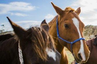 31fa0ba51f83b12b326d19bdd85282da393b74a4 - Echuca horses snapped up, after unprecedented support