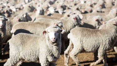 More good news is on the horizon for Australian agriculture, including sheep farmers.